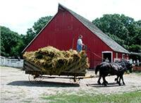 horses pull a wagonload of hay at 1900 farm