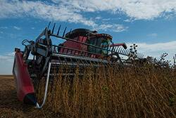 combine cutting soybeans at harvest