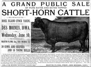 sale ad for short horn cattle from 1891