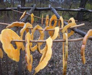 squash drying on a rack