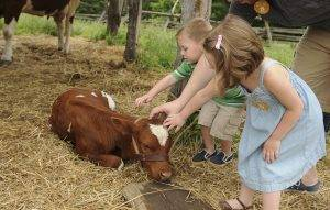 children pet calf