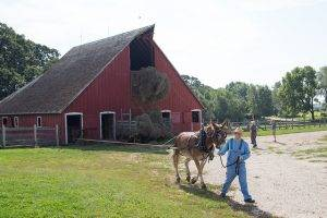 interpreter and mule working outside the 1900 barn