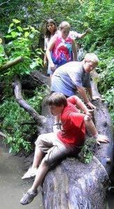 Creek walk at Day Camp