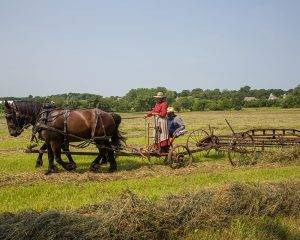 horses pull farming implements through field