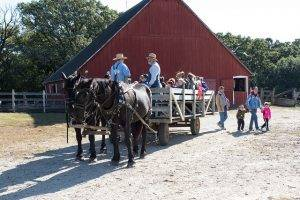 horse drawn wagon drops off visitors in the 1900 farm barnyard