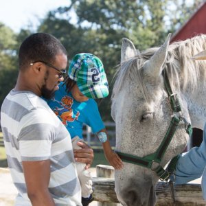 visitors interact with horse