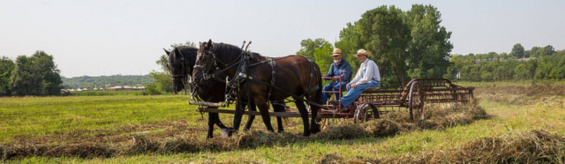 horses pulling farm implements