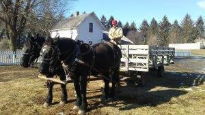 horses pull a wagon