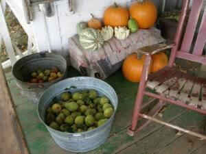 pumpkins on 1900 farm porch